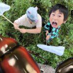 【鬼滅の刃】ぎゃー🥶伝説の巨大カブトムシが現れた😱最強はどっち⁉️昆虫対決!王様を決めろ!寸劇【全力きっずTV】Kimetsu no Yaiba